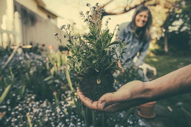výsadba květin.jpg