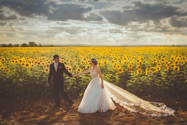 novomanželé na slunečnicovém poli