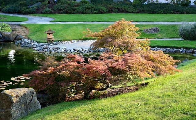 japonský javor u jezírka